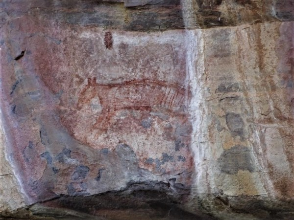 Thylacine in rock art at Kakadu..Northern Territory.