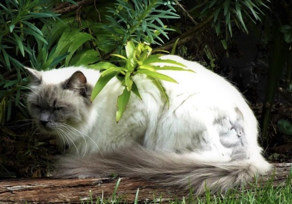 A cat with attitude at Blackheath.