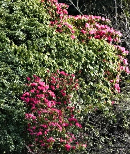 Rhodos in early August, a prime example of climate confusion.