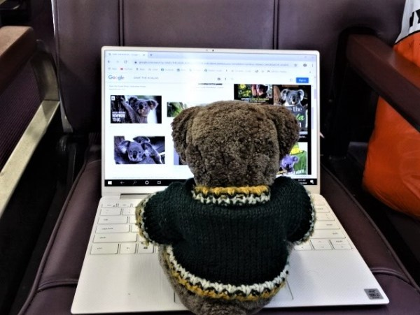 Editor Des works on his koala story.