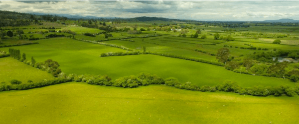 The English style countryside of Tasmania with its hawthorn hedging.