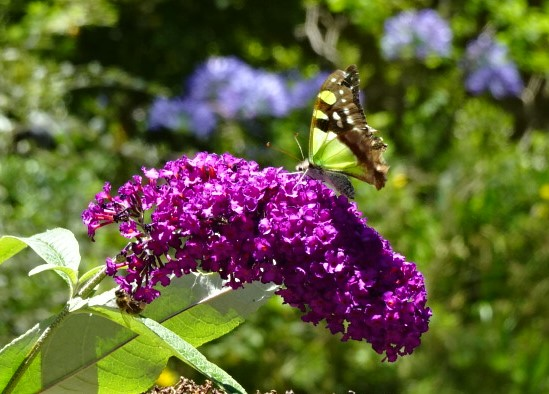 On a hot day the butterflies are busy