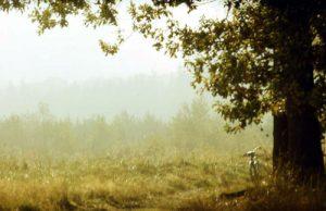 Fahrrad mit Landschaft
