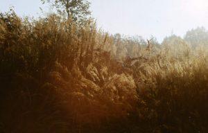 Gegenlicht in der Pessiner Heide