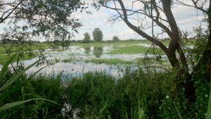 Der Boden des Luchs ist den Wassermassen nicht gewachsen.