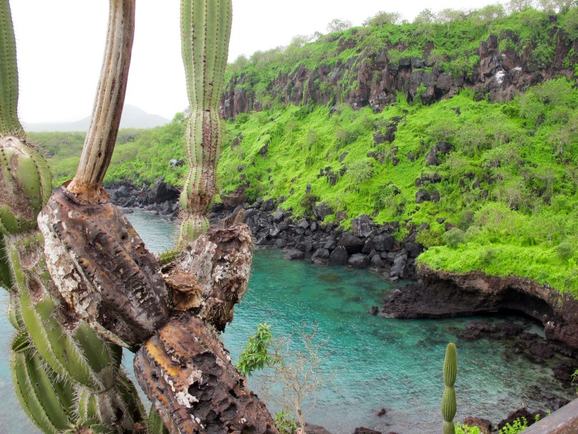 Tijeretas for Snorkeling with Sea Lions & Turtles in San Cristobal, Galapagos