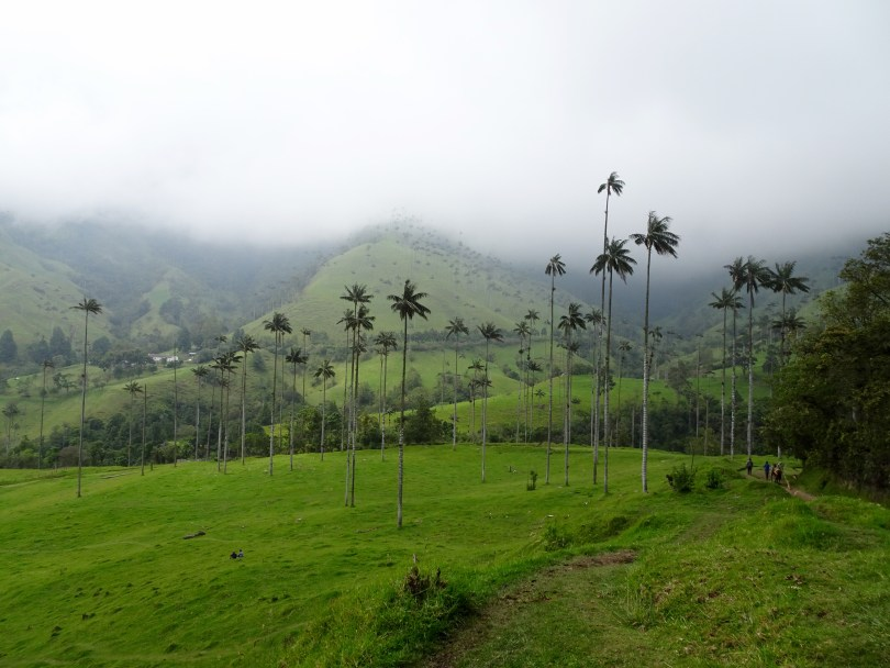 How to Perform the Cocora Valley hike - option a