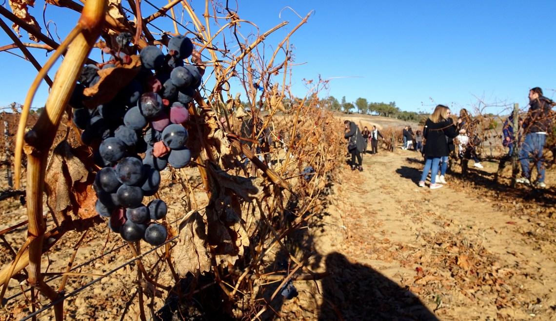The Wine Route of Ribera del Duero Region: Zamora, Aranda, Peñafiel + Salamanca