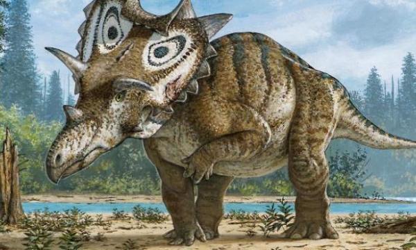 Sertifikat Pemburu Dinosaurus