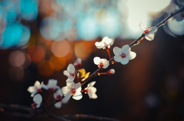 Spring Day blossoms-35