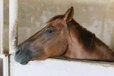 Beautiful horses-141 copy