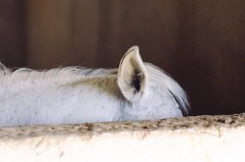 White ears