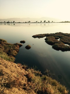 Saltwater marshes, Izmir Turkey