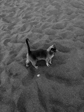 Black cat on black sandy beach, Salina, Italy
