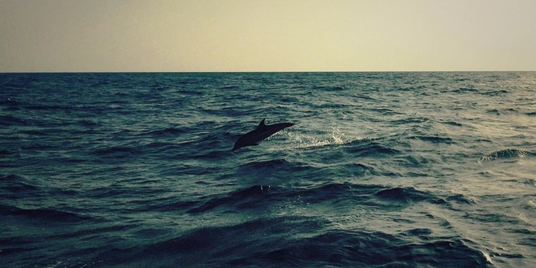 Jumping dolphin, Sicily