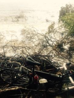 Fallen trees and bike on Ararapira beach, Brazil