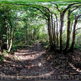 Photosynth Frith Wood Ledbury fine art photographer photography herefordshire 1ff17b