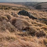 Near Wistman's Wood, Dartmoor, landscapes and nature photographer photography herefordshire 6539