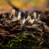 Dog Hill Wood, Ledbury, Herefordshire in Autumn nature photographer photography fungus 2680