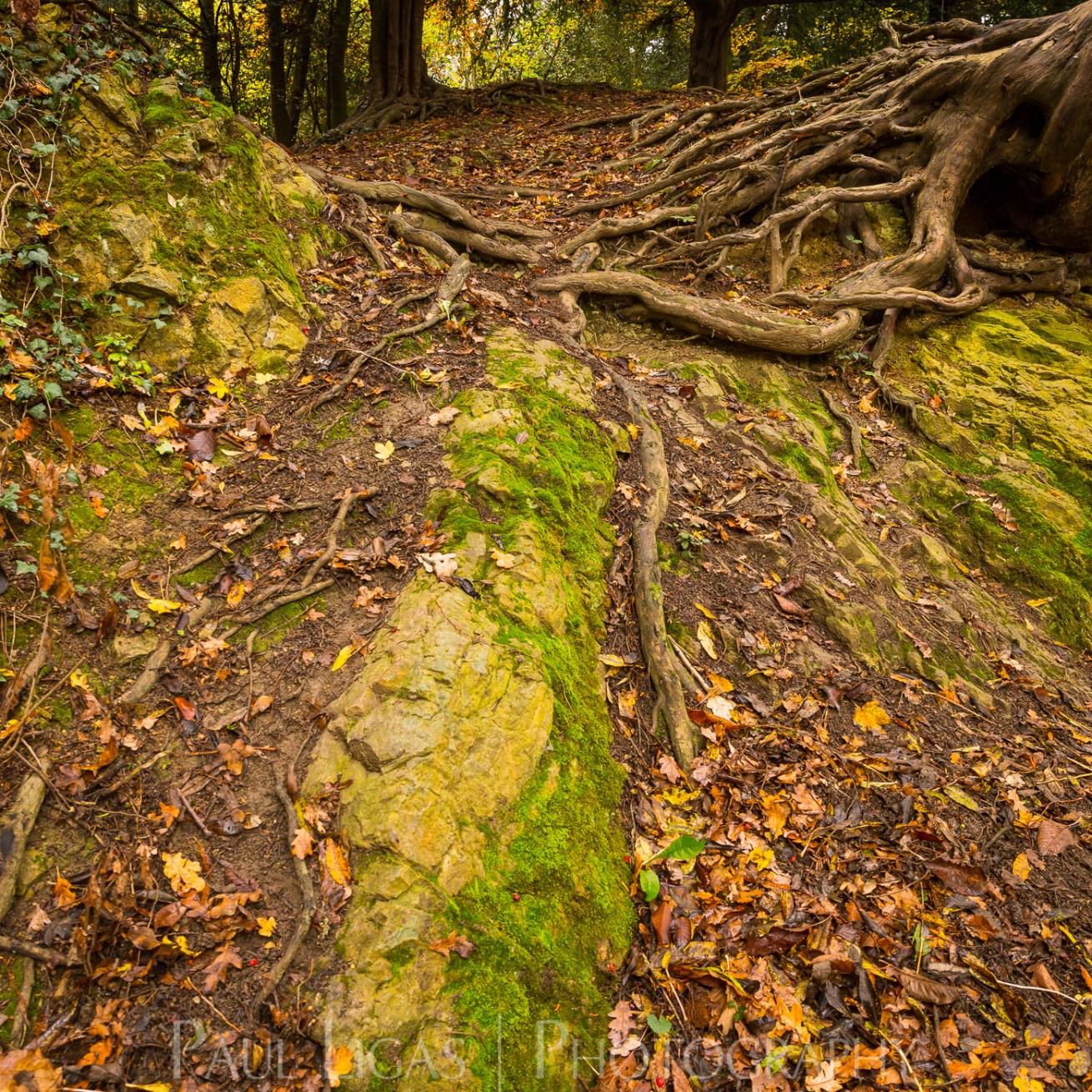 Dog Hill Wood, Ledbury, Herefordshire in Autumn nature photographer photography landscape 2645
