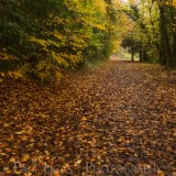 Dog Hill Wood, Ledbury, Herefordshire in Autumn nature photographer photography landscape 2653