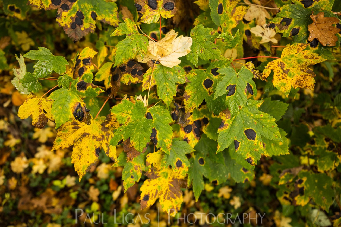 Dog Hill Wood, Ledbury, Herefordshire in Autumn nature photographer photography landscape 2664