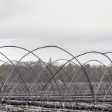 General Public, Ledbury, Herefordshire farming agriculture photographer photography polytunnel The Hop Project 4323