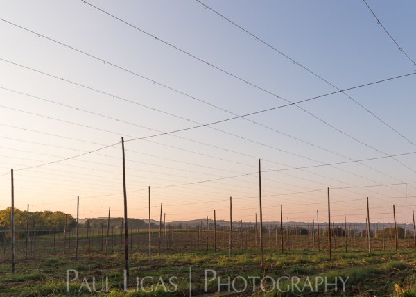General Public, Ledbury, Herefordshire farming agriculture photographer landscape photography hops