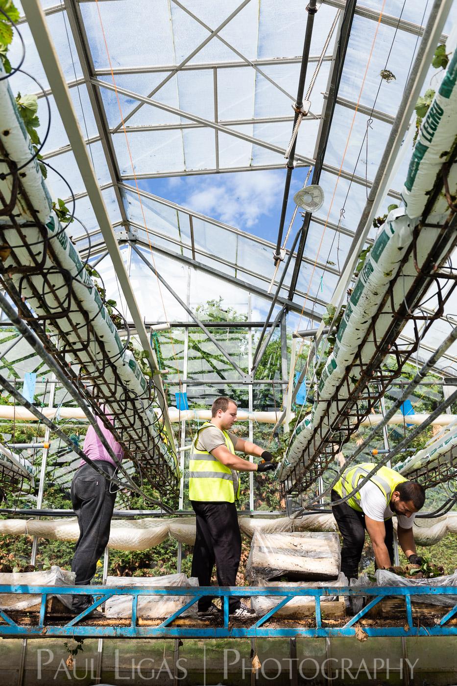 Haygrove Limited, Ledbury, Herefordshire farming agriculture photographer photography 3475