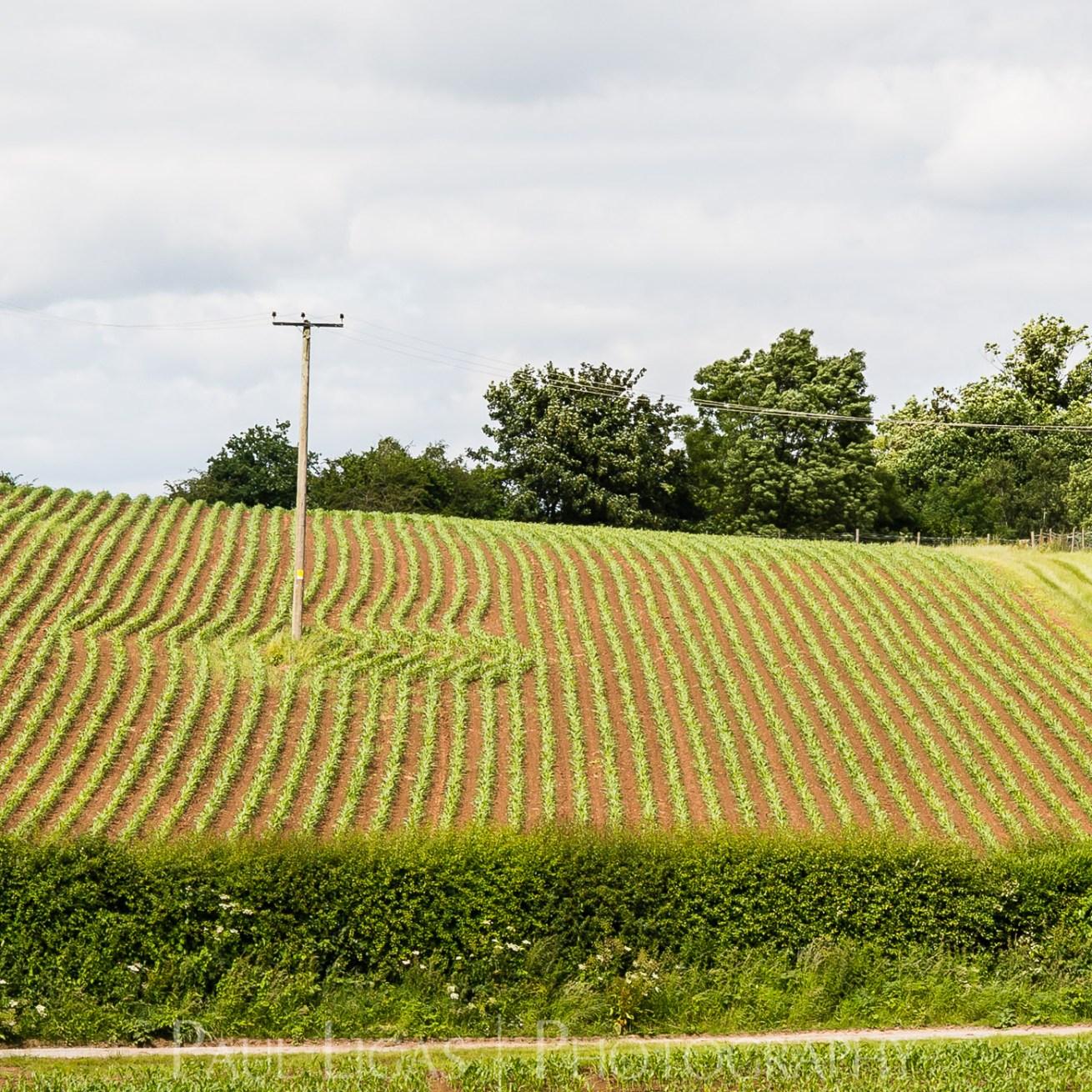 Townend Hop Farm, Herefordshire farming agriculture landscape photographer photography 8969