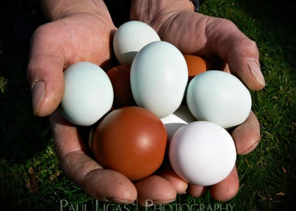 Mill House Farm product agriculture photographer photography farming eggs herefordshire