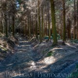 Forestry, fine art photography photographer herefordshire 4201