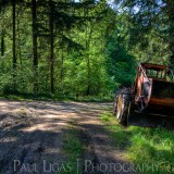 Forestry, fine art photography photographer herefordshire 4284