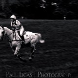 Highclere Horse Trials, Animal and Pet photographer Photography herefordshire sports 0712