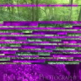 Mobile phone camera error, fine art photographer photography herefordshire 2008
