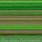 Mobile phone camera error, fine art photographer photography herefordshire 6062