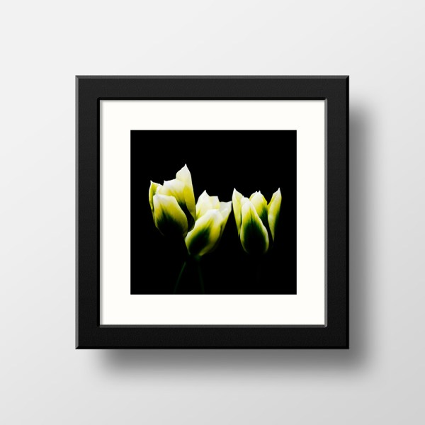 Paul Ligas Photography Print Yellow Tulips 3 mockup