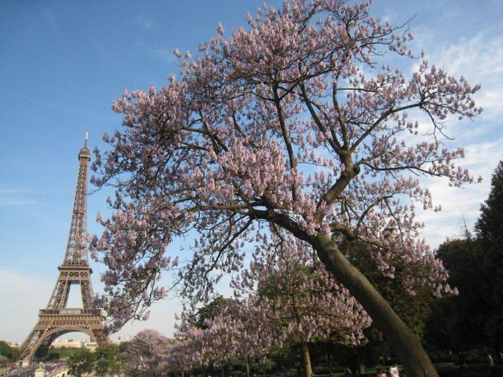 павловния в Париже