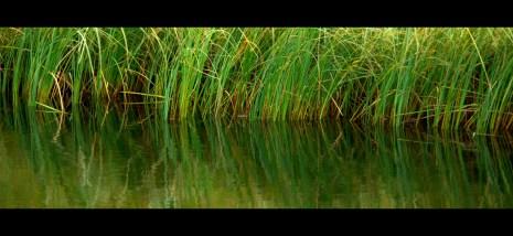 big reeds frame black
