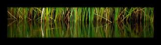Wide Reeds framed