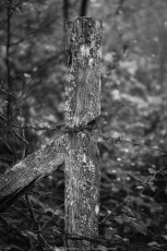 Hand hewn fence post