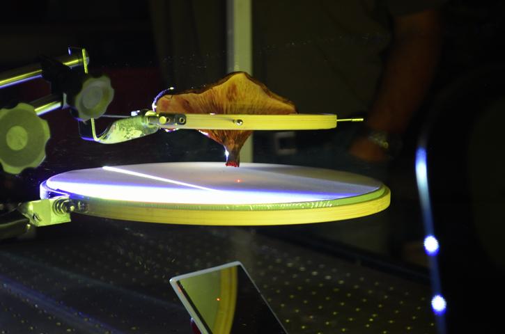 Photo documentation of Mycolophonia: Experiment 1