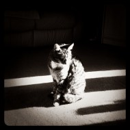 Cat, Sunlight, Instagram