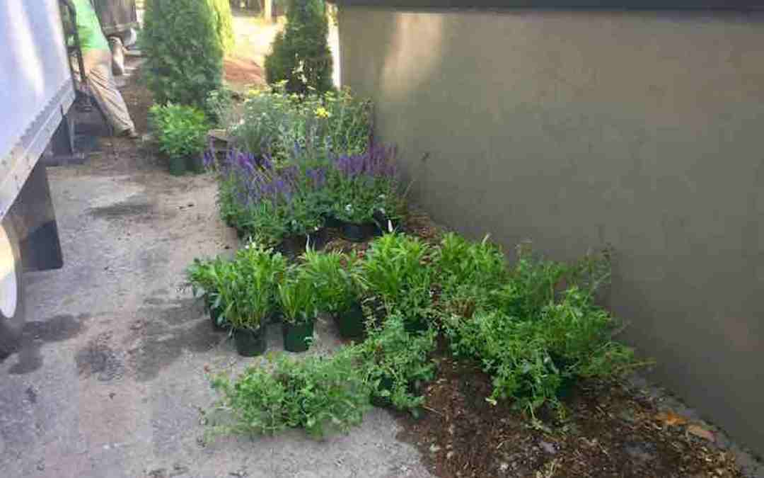 New Client's Garden