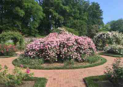 Rose Consultant to Biltmore