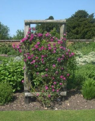 Roses on a panel make dividers in the garden.