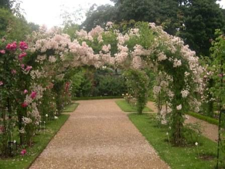 A series of arching roses along a path draws your eye to the other end.
