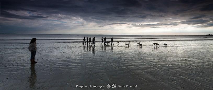 promenade-de-chiens