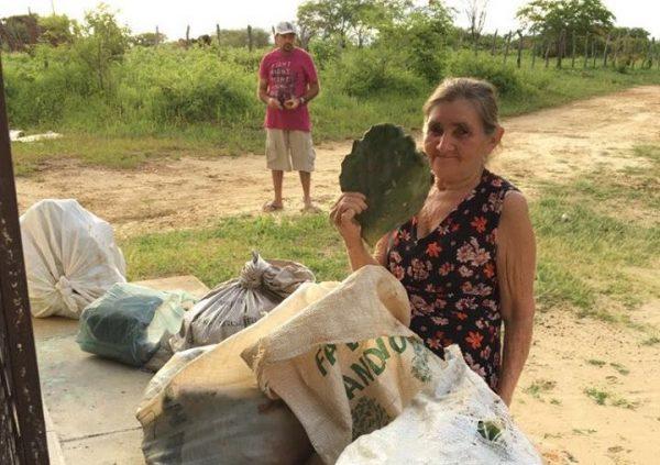 Prefeitura de S J dos Cordeiros distribui 10 mil raquetes de palma para produtores
