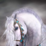 White Horse Iphone Beautiful Horse Wallpaper White Wallpaper